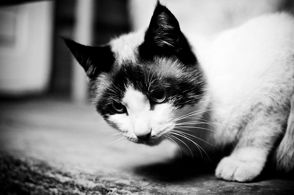 Serious Cat #8/365