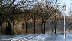 peinitz (hallebudgies) Tags: winter saale hochwasser schneeschmelze wrfelwiese