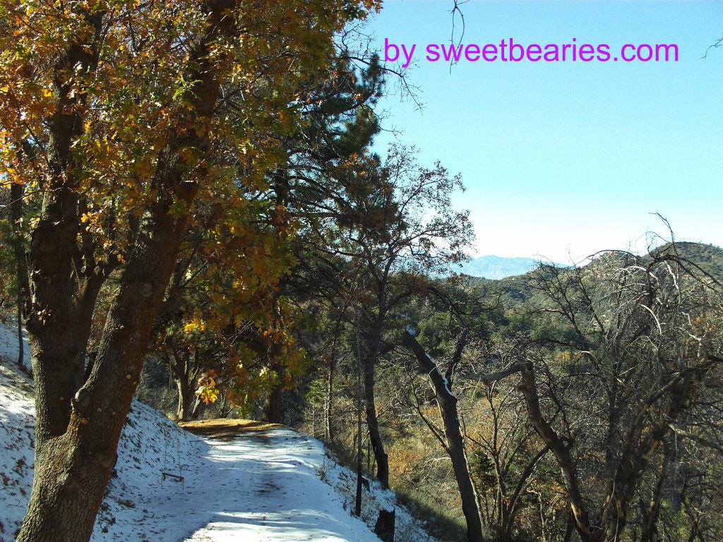 Snow In The San Bernardino Mountains