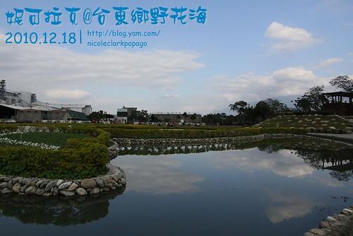 花東追普快tn_011_台東鄉野的花海