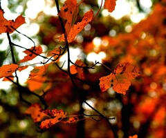 I Dream of Fall (Carl Chen) Tags: