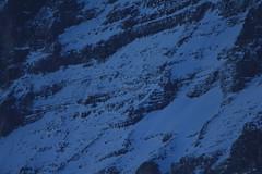 Patrouille Suisse in der Formation / Figur Croix / Croce vor Eiger Nordwand / Eigernordwand im Kanton Bern der Schweiz (chrchr_75) Tags: mountains alps army schweiz switzerland force suisse swiss military air tiger berge demonstration bern alpen christoph svizzera berne schweizer wengen berner januar armee berna 1101 samstag militr kleine berneroberland oberland luftwaffe programm scheidegg suissa northrop kunstflug patrouille 2011 lauberhorn patrouillesuisse f5e kanton chrigu kampfflugzeug vorfhrung kantonbern brn chrchr kampfjet hurni lauberhornrennen chrchr75 chriguhurni kunstflugstaffel albumschweizerluftwaffe januar2011 chriguhurnibluemailch albumzzz201101januar albumpatrouillesuisse