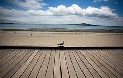 Auckland, NZ (C) 2010