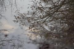 passatempi (Melliflua) Tags: foglie alberi autunno riflessi rami pozzanghera riflessione parcodimonza riflettere pensieritristi