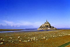 Paysage de France. Le Mont Saint Michel. Kodachrome, november 1958 (Margnac) Tags: france sheep 1958 kodachrome jeanpaul montsaintmichel prssals mountsaintmichael mountsaintmichel margnac motons paysagedefrance