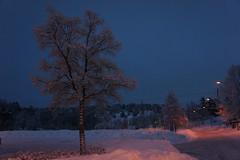 winter 2011 (kezwan) Tags: winter tree kezwan winter2011