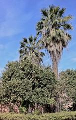 marrakech_180111_0123 (Ben Locke) Tags: