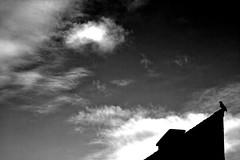 birdie (Martin.Matyas) Tags: sky bw canon wolke sw schwarzweiss krähe dunkelheit thedarkside canonefs1785isusm eos400d schwarzweissfoto