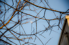 Looking to the Moon through Branches (Manarianz5) Tags: china nikon nikkor vr afs 2010 dx f3556 18105mm d7000 throughbranch