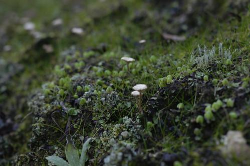 Mushroom Landscape