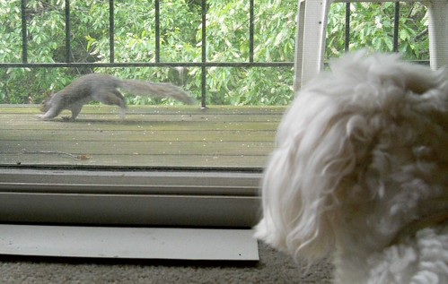 Squirrel Watching
