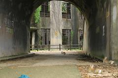 image (Rubia.A) Tags: hiroshima japan okunoisland rabbitisland うさぎ 兎 広島 大久野島 廃墟 rabbit ruin