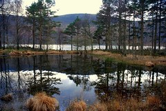Watery Copse (floato) Tags: reflection forest ennerdale watery copse