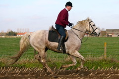 IMG_2307 (equiliber) Tags: horse canon cheval europe ren pferd equestrian hunt foxhunting equus chasse paard jachtclub jacht sinthubertus slipjacht chassecourre equiliber hippisch jachtrit ekenazareth equusjachtclub jachtwandeling clubjachtrit08112009 sthubertusrit cavalerievandefederalepolitie