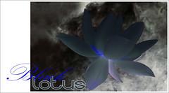 Black Lotus Design - BlackLotus-19 (Bahman Farzad) Tags: black flower macro yoga peace lotus relaxing peaceful meditation therapy lotusflower lotuspetal blacklotus lotuspetals lotusflowerpetals lotusflowerpetal