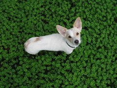 today we don't feel like doing anything (rAnita nOe) Tags: dog pet verde green walk paseo mascota perra treboles sooc ranitanoe