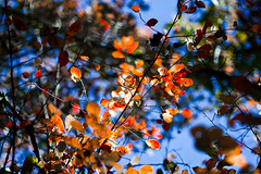Auburn Colors (mjkjr) Tags: blue atlanta sky orange fall canon ga rebel leaf seasons availablelight atl trail dslr newnan whatsup treebranch telephotolens 2010 selectivefocus fayettecounty 135l cowetacounty potn leaveschanging october22 550d linecreek t2i ef135mmf2lusm clubsi linecreeknaturearea mjkjr httpwwwflickrcomphotosmjkjr october222010