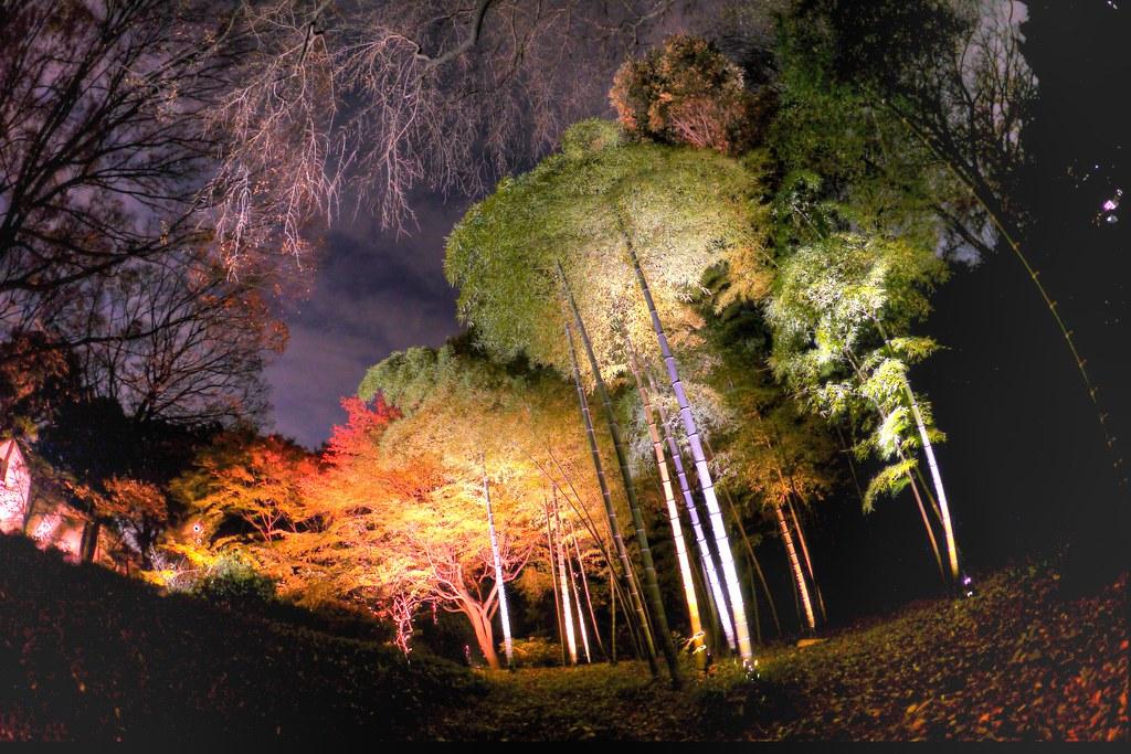 六義園紅葉ライトアップ HDR4