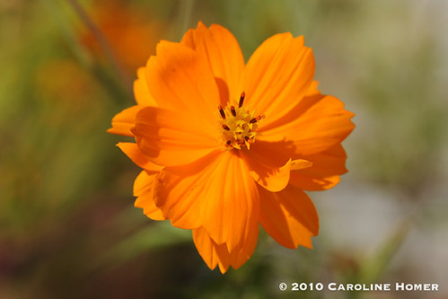'Bright Lights' cosmos