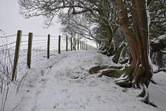 snowy path (Greg.w2) Tags: uk winter england snow tree english fence countryside nikon december post path derbyshire border 2009 hawthorn d90 broadbottom chisworth