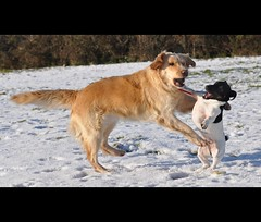 maggie and mr darcy (shocko990) Tags: snow nikon rush d90