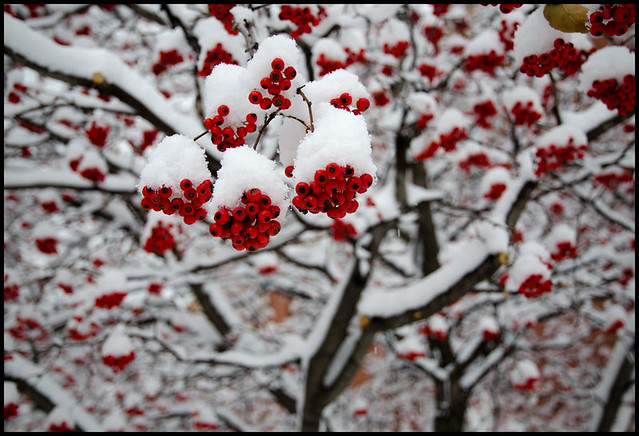 winterberryscape