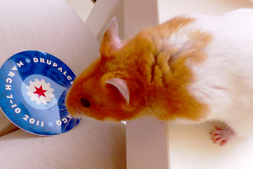 Mouse Love DrupalMouse Love Drupal