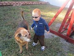IMG_4762 (drjeeeol) Tags: dog pet baby yard backyard charlie triplet rhodesianridgeback monkee 2010 26monthsold