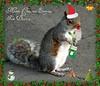 A Little Festive Park Squirrel. (Church Mouse 07) Tags: uk winter nature animal lumix december wildlife panasonic british 2010 greysquirrel atthepark dmcfz28 churchmouse07 christmascard2010 festivesquirrel