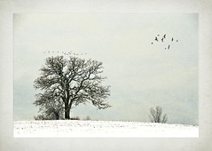 Snow and Tree on Rolling Hill