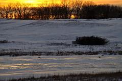 Three Coyote Sunset DSC_7568