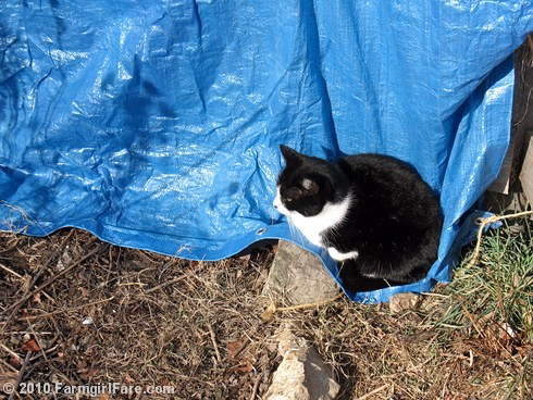 Kit Kat Holding Down the Tarp