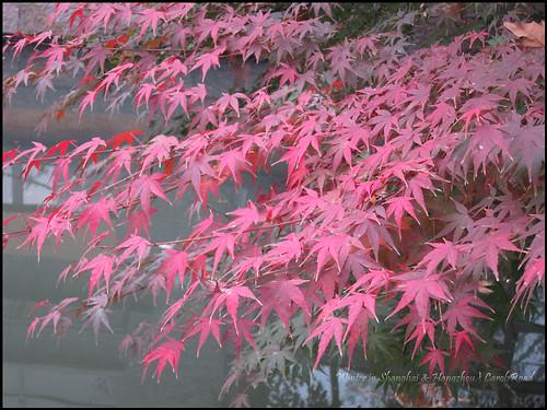2010-12-08 Shanghai 072P20