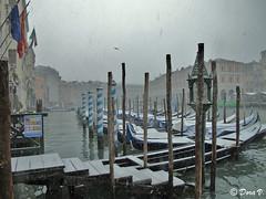 Snow in Venice (Dora Joey) Tags: venice neve neige venise venezia snowinvenice neveavenezia neigeàvenise bestcapturesaoi