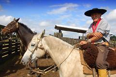 Av campeiro (Eduardo Amorim) Tags: brazil horses horse southamerica brasil caballo cheval caballos cavalos pelotas pferde cavalli cavallo cavalo gauchos pferd riograndedosul pampa hest hevonen campanha brsil chevaux gaucho  amricadosul hst gacho  amriquedusud  gachos  sudamrica suramrica amricadelsur  sdamerika   costadoce americadelsud  americameridionale eduardoamorim iayayam yamaiay