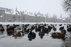 A Duck's view on Dutch Parliament (-hndrk-) Tags: snow ice nikon thenetherlands ducks thehague hofvijver 167 binnenhof coots d90 explored courtpond theonlyhole theoriginaldutchparliamentbuildings