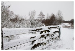 Sint Annabeemden (Waterjuffer1) Tags: snow landscape december sneeuw heel wit landschap waterjuffer1 sintannabeemden