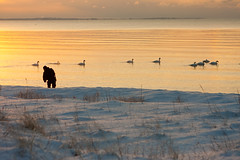 At the beach a winterday (Jimmy Svensson) Tags: winter sunset snow beach birds skne strandbaden vinterfoton