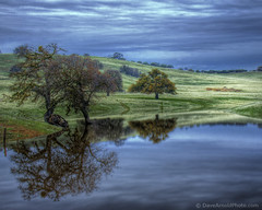 The mood on Carrisa (Dave Arnold Photo) Tags: california ranch ca usa lake storm reflection tree water rain us photo image farm picture pic images calif reflect photograph getty mckittrick farmyard kerncounty davearnold davearnoldphotocom arnoldd