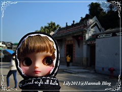 Little Lily Brown@Cheung Chau