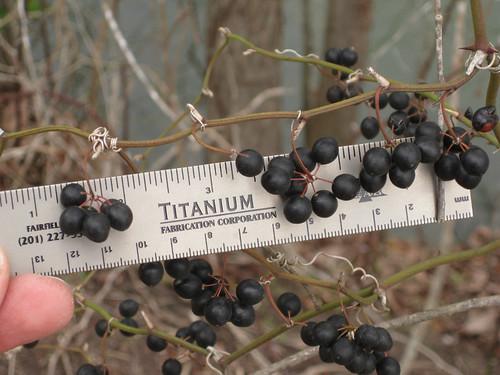 briarberries