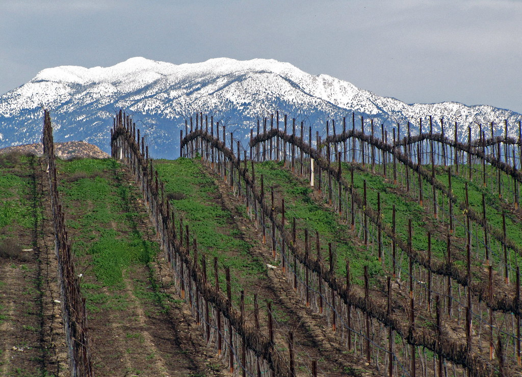Temecula vinyards in January
