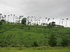 Bandung to Jakarta (knsalim) Tags: 30december2010