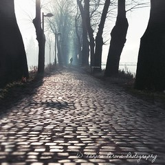 The Gates. Pirot, Serbia. Pirotski Kej. Tanjica Perovic Photography. (Tanjica Perovic) Tags: trees treealley person solitary walk path vanishingpoint perspective cobblestone mist misty atmosphere mystic lines mistique light shadow backlight street mood sigma1770mmf2845dcmacro canoneos400d srbija dreamy morning pirot serbia pirotski pirotskicilim pirotsrbija tanjicaperovic тањицаперовић photography pirotserbia pirotskikej pirotkej kej kejnanisavi nisava нишава кејнанишави tanjicaperovicphotography фотографија fotografija srpski српски fotograf фотограф photographer gettyimages getty availableforlicensingongettyimages fotografijepirota floodbarrier barrieragainstflooding svetozarmisirlic quay floodingprotection throughherlens