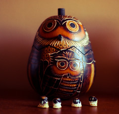 New in town (MamaOwlPhoto) Tags: gourd owls thankyoucara agifrfromtumbleweedineden