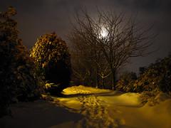 Moonlit Clouds (K-Burn) Tags: moon snow tree night garden drive fife pitscottie