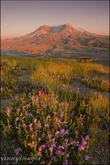 Helens (Vinnyimages) Tags: sunset summer mountain flower washington northwest cascades washingtonstate mountsthelens vinnyimages wwwvinnyimages