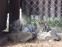 Cubs_101410l