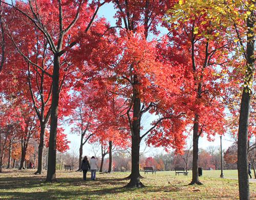 Los últimos árboles en otoño