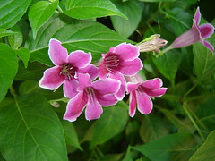 1043_flowers